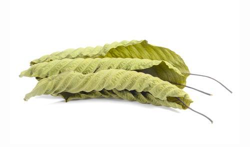 Horned Leaf Green Thai